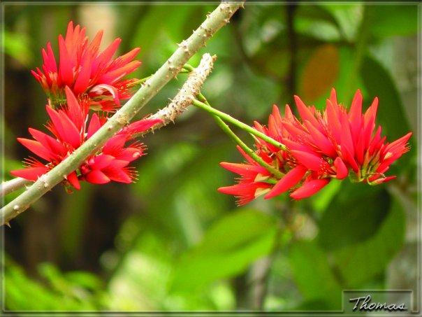 kerala flower