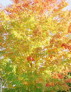 Photo by SnaggleTooth Autumn 2007