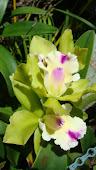 Flor Amistad
