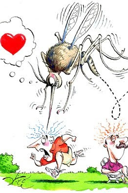Y mosquitoes heart me