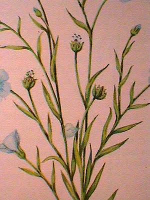 Lino/Flax