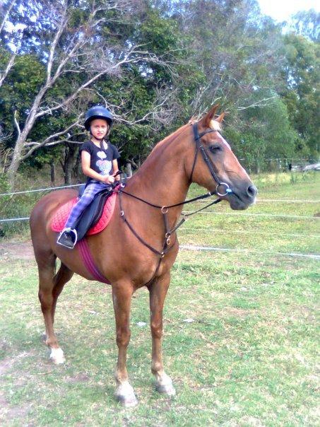 Save A Horse Australia Horse Rescue And Sanctuary: Rescue ...