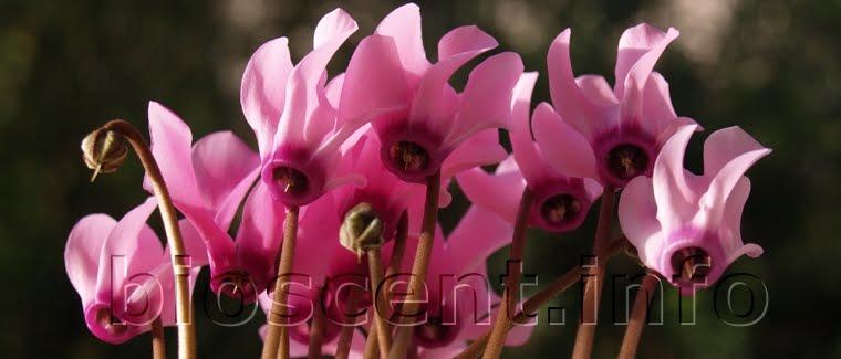 Echte Naturparfums? Naturparfüm ist nicht immer ein Naturparfum...