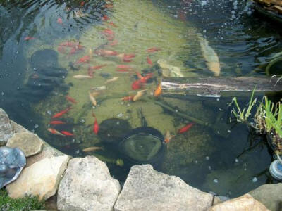Pond filters garden pond filter for Outdoor fish pond filter
