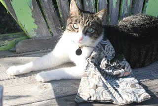 reusable bag being modeled by a cat