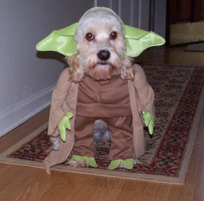 funny pictures of dogs in costumes. Dog+costumes+funny