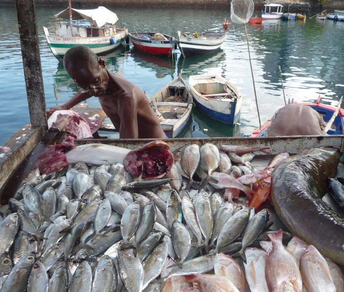 Barraca de peixes