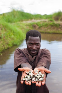 Heifer project participant with Nile tilapia fingerlings in Tanzania