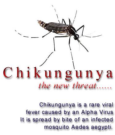 [Image: chikungunya_1.jpg]