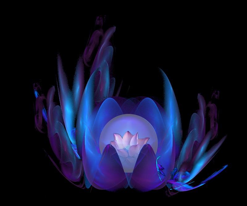 [Fractale+lotus+3.jpg]