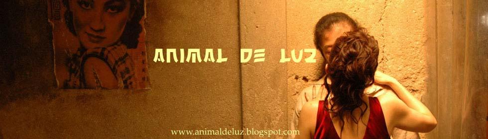 ANIMAL DE LUZ