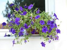 Φυσικά Λουλούδια