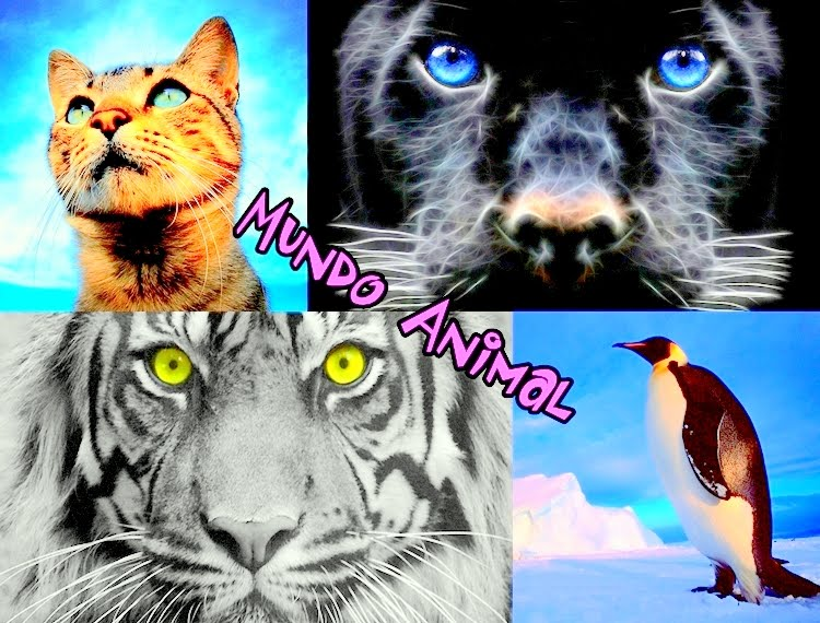 mundo animal