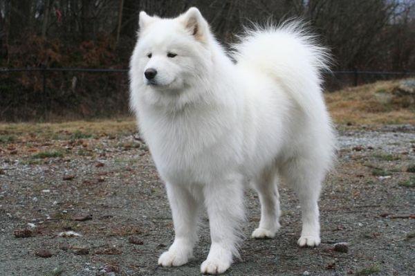 Puppy O puppy (≧ω≦)