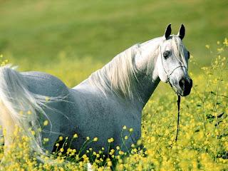 Horse And Garden