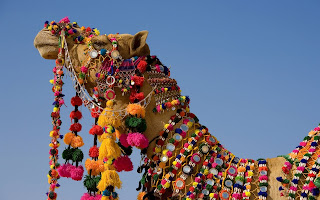 Camel India Festivel wallpaper