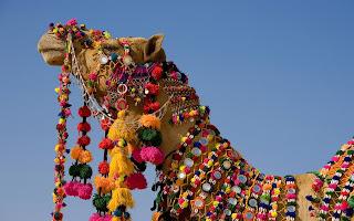 Camel India Festivel wallpaper