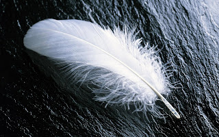 Feather On Black Screen wallpaper