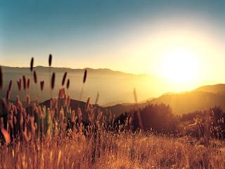 Sun And Golden Field wallpaper