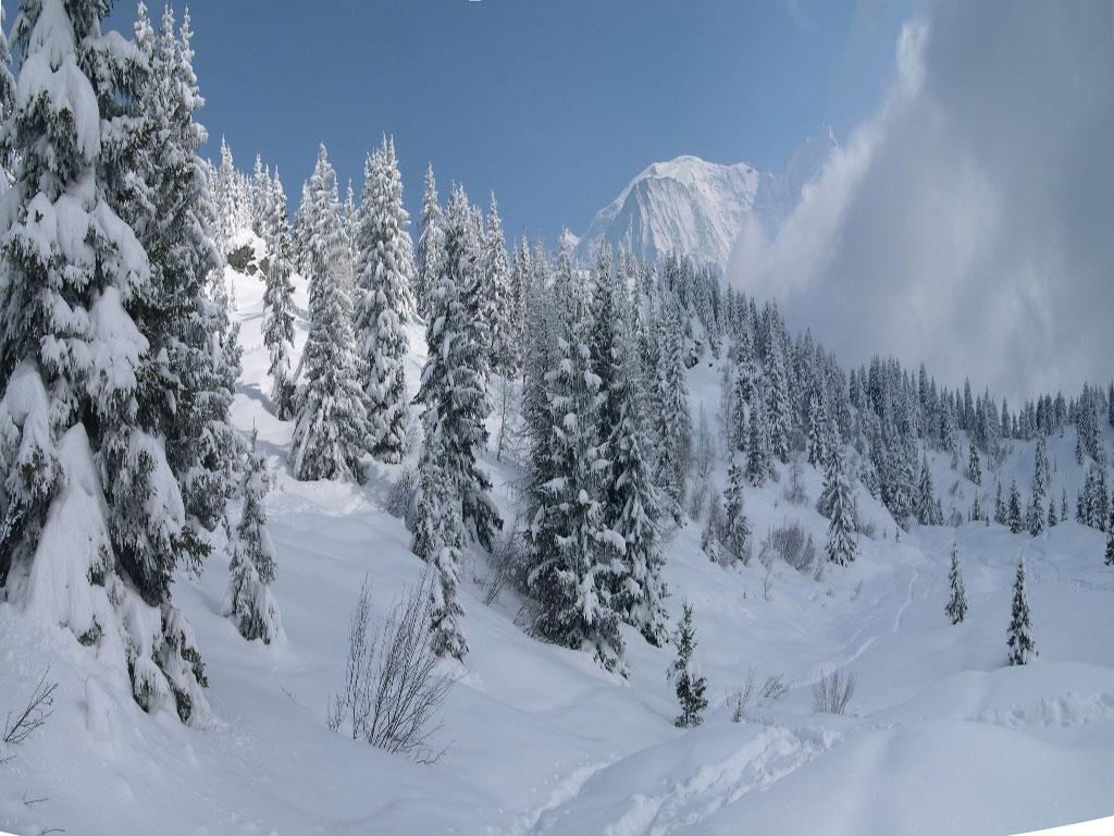 wallpaper tree snow winter - photo #43