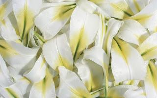 White Flowers wallpaper