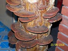 colony fungi