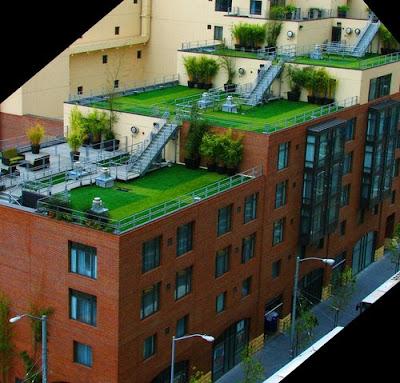 Health club rooftop garden - San Francisco, California