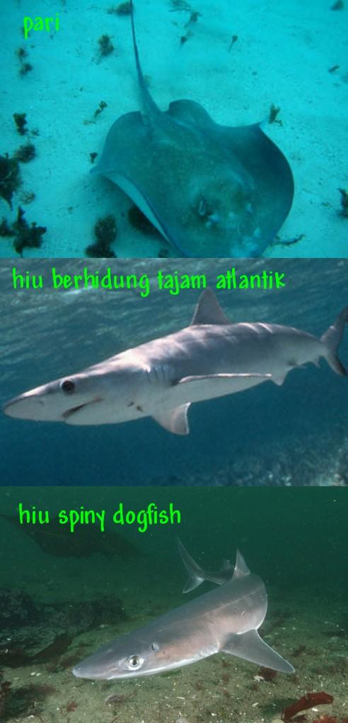 foto ikan hiu makan manusia - gambar binatang - foto ikan hiu makan manusia