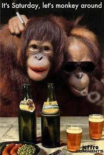 ill monkeys uncle monkeys drinking alcohol