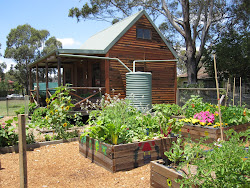 Nano Cottage Kitchen Garden - St Michael's Blacktown South
