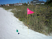 Great Florida Beach Walk . visited North Longboat Key on Saturday, Nov. 6. (great florida beach walk flag nov )