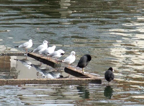 [a_oiseaux_DSCF3520.jpg]