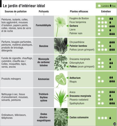 Essentielle les plantes d tox ou plantes d polluantes pour votre int rieur - Plante contre l humidite dans la maison ...