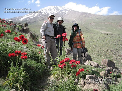 Mt Damavand poppy fields, Photo by Ardeshir Soltani
