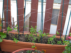 My innovative dental floss sweet pea trellis!