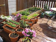 Garden on 4/23/08
