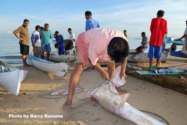 Hidangan dari sirip ikan hiu terkenal lezat, tetapi harganya sangat