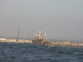 Le bateau-oiseau