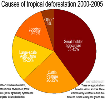using a case study of a tropical rainforest describe the effects of deforestation A study appearing this month in the journal nature describes the role  in the  study, using remote satellite sensing, and computer simulations,  in this picture  we see the impact of clearing of a tropical rainforest  that is not the case in  tropical forests where once land is cleared it is used for other purposes.