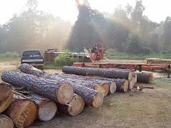 Nov 05 Pine Logs