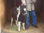 Our Miniature Horse