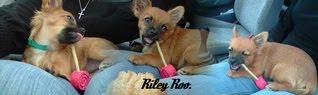 Riley's Blog