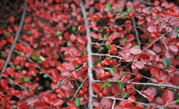 piękne barwy jesieni