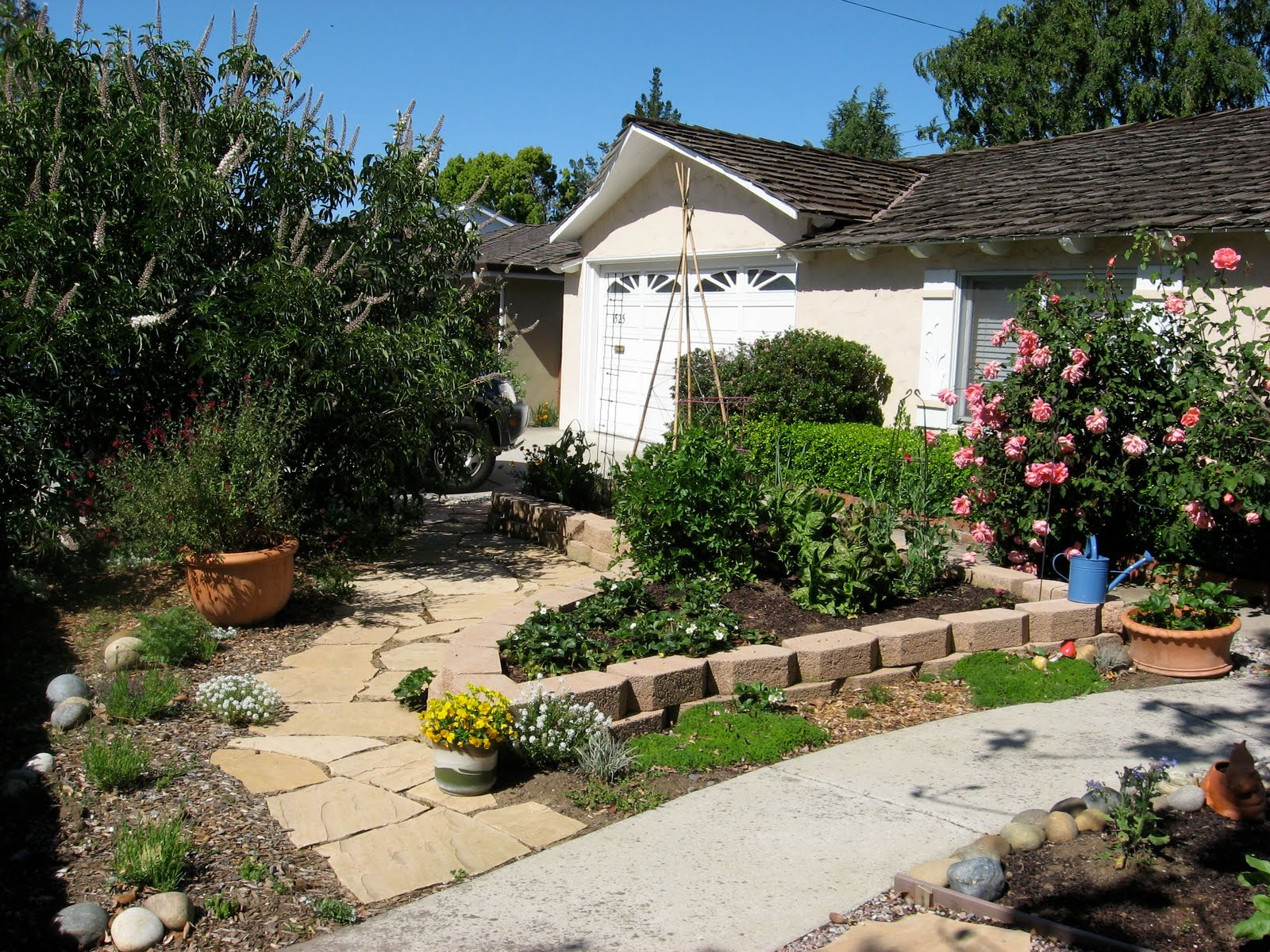 urban artichoke transform your garden transform your life