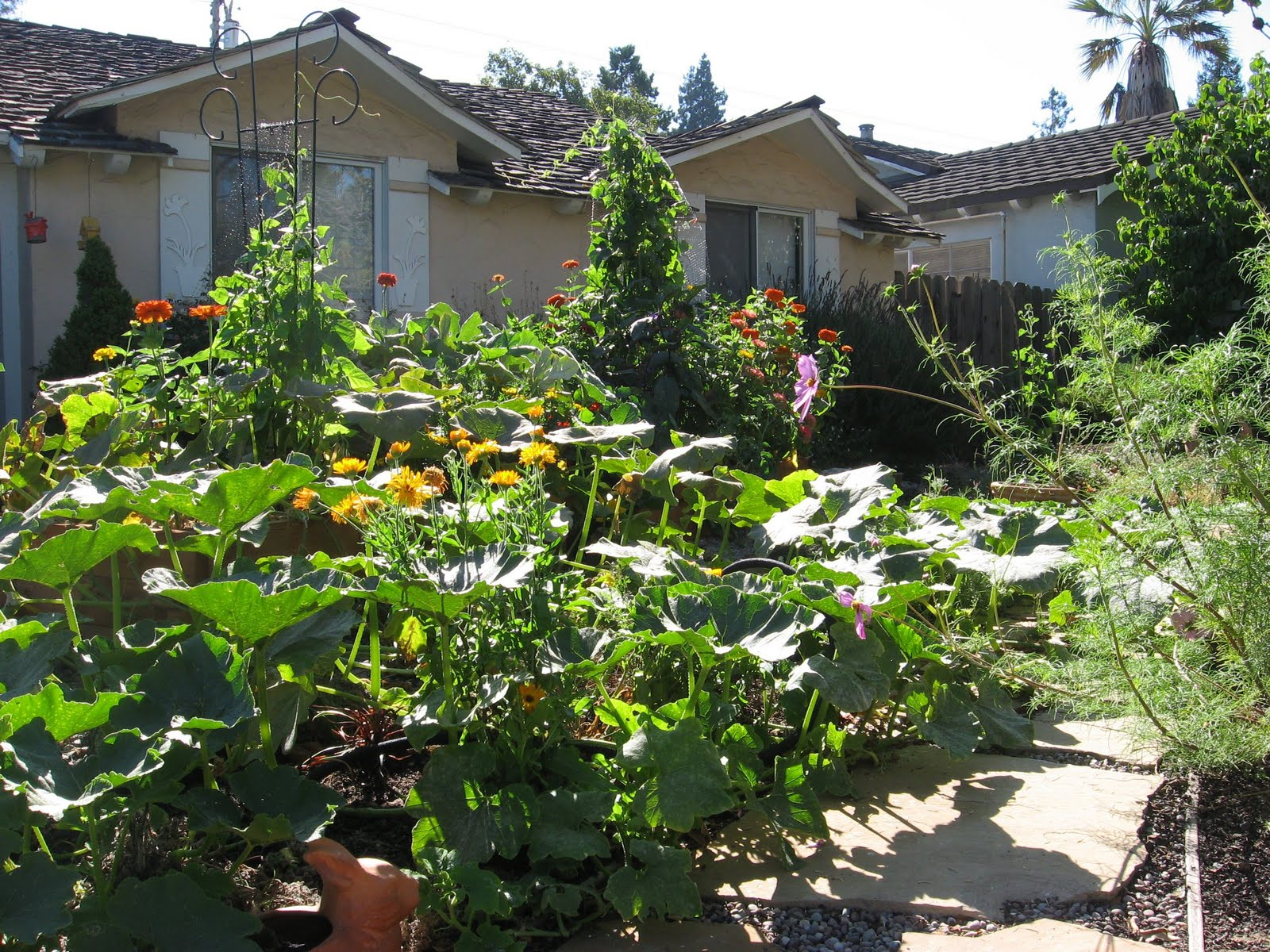 Front Yard Edible Garden Ideas urban artichoke: 2010