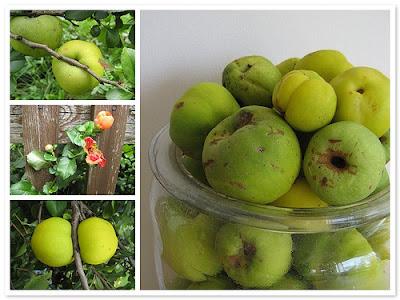 NAMI-NAMI: a food blog: Beautiful flowers, fragrant fruit ...