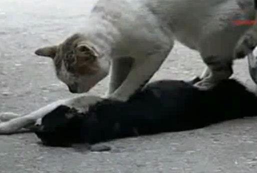 http://4.bp.blogspot.com/_YyXZ9LFygq0/TNN_nqMkXmI/AAAAAAAACsU/WnSZQ_MfjrE/s1600/kucing1.JPG