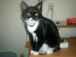 My baby Gizmo