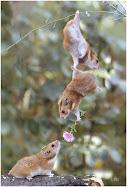 Amore dei topolini !
