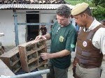 IBAMA, MINISTRIO PBLICO E POLCIA MILITAR PRENDEM TRAFICANTES DE AVES SILVESTRES